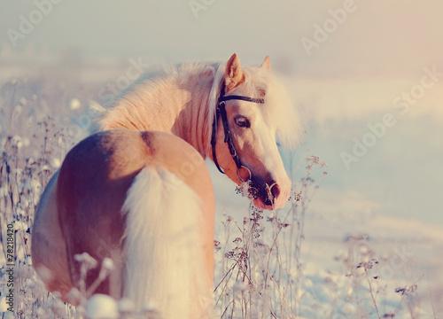 Horse on walk.