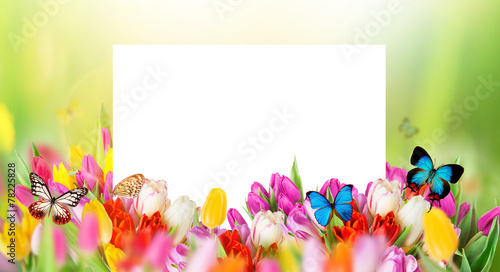 Photo sur Toile Papillons dans Grunge tulips with white blank paper
