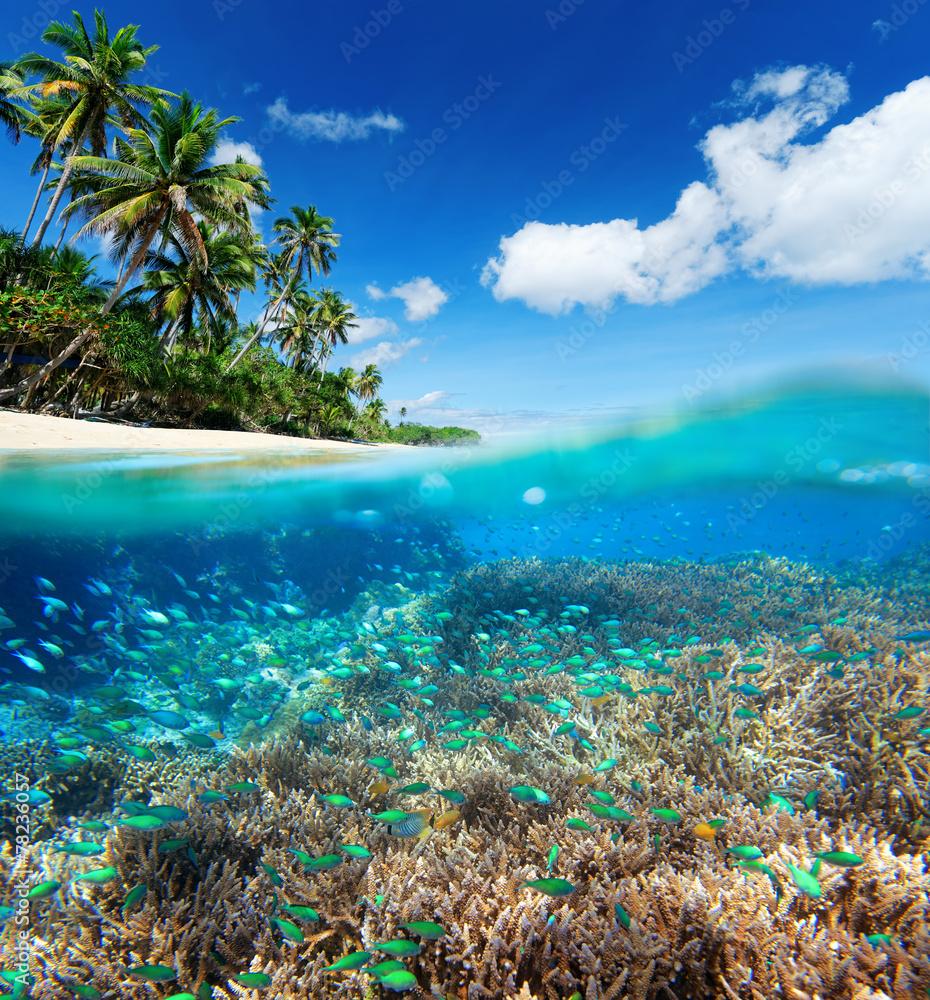 Fototapeta Coral reef in tropical sea.