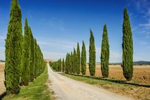 Tuscany Road With Cypress Tree...