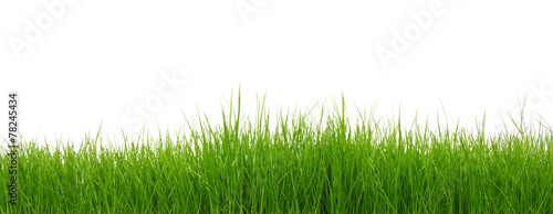 Deurstickers Gras Green grass on white background