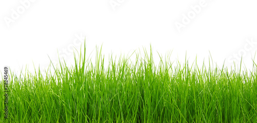 Green grass on white background #78245469