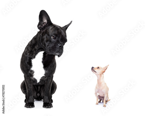 Fotografie, Obraz  two big and small dogs