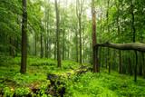 Tropikalny nastrój w lesie
