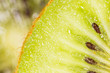 kiwi as a background. super macro