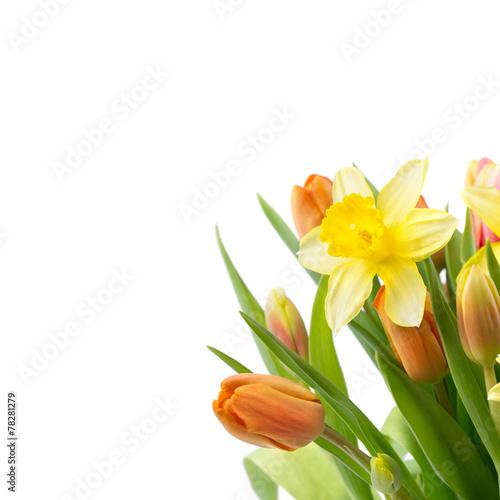 Staande foto Narcis Blumen Freisteller - Osterglocken und Tulpen