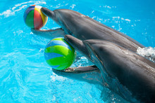 Dolphin Playing With The Balls