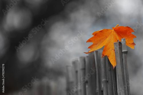 Beautiful autumn leaf on bamboo fence