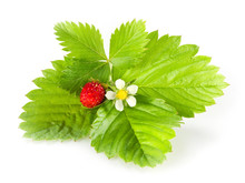 Wild Strawberry Isolated On Wh...