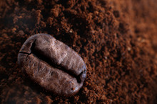 Coffee Bean On The Ground Coffee