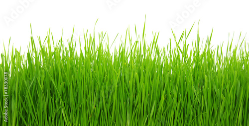 Green grass on white background #78330078
