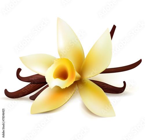 Fotografía  Vanilla flower and pods