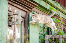 Funny Cat Jumping Into The Open Window