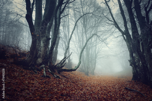 Spoed Foto op Canvas Donkergrijs Mysterious autumn forest in fog