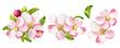 Leinwandbild Motiv Apple tree blossoms with green leaves. Spring flowers set