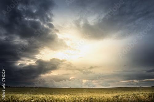 Cuadros en Lienzo Stormy sky over wheat field