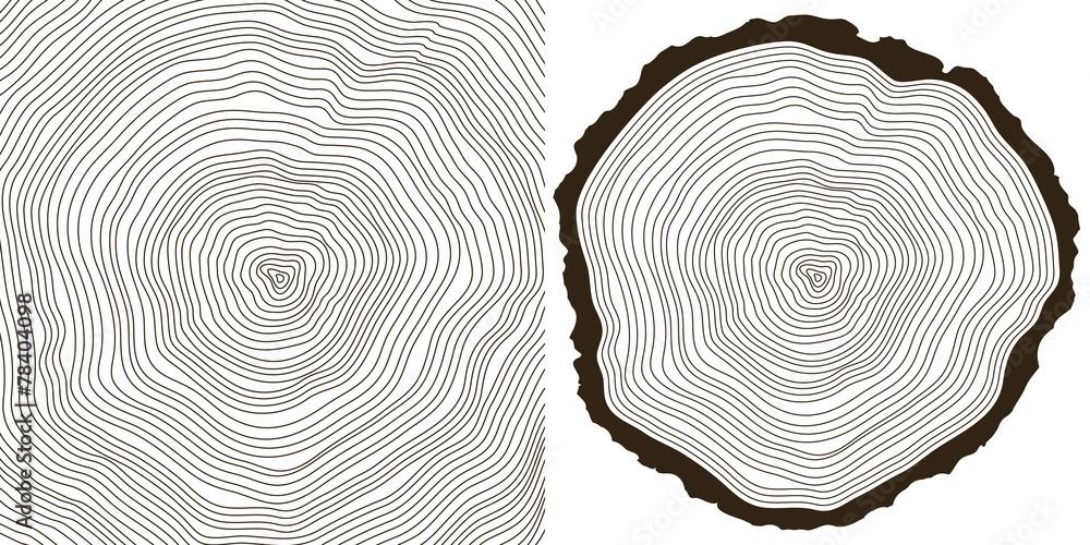 Fototapety, obrazy: tree rings