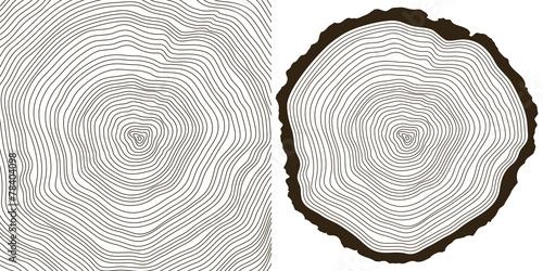 Foto  tree rings