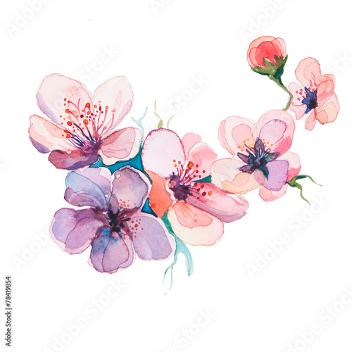 The spring flowers watercolors isolated on the white for Spring flowers watercolor