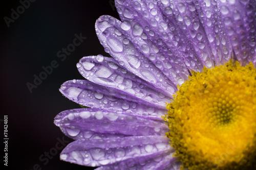 Fotografie, Obraz  Morning dew on flower