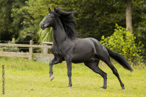 Fotografie, Obraz  Black Beauty