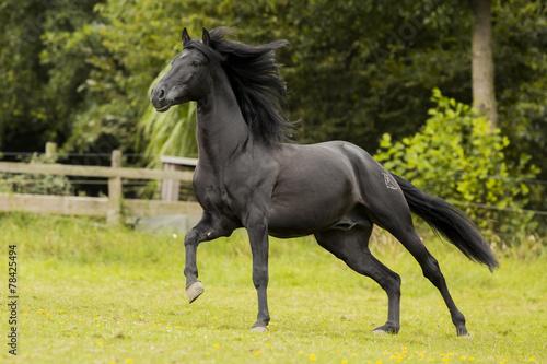Photo  Black Beauty