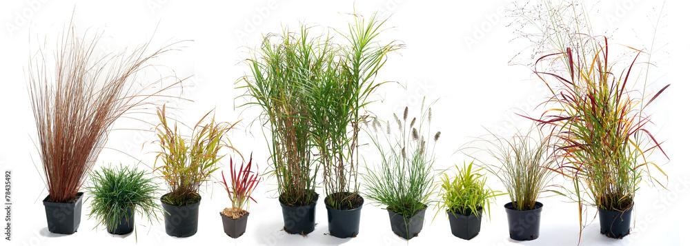 Fototapeta The most beautiful ornamental grass garden
