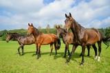 Konie zielonej polance