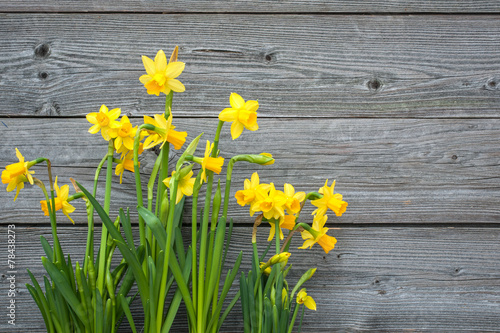Spring daffodils against old wooden background Poster