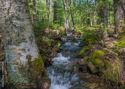 Printed kitchen splashbacks River Fast Flowing Mountain Runoff Stream
