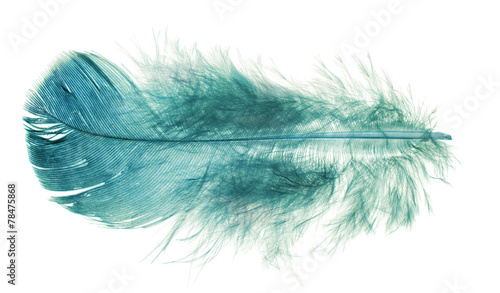 blue fluffy feather isolated on white
