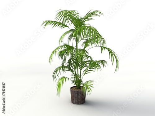 Zimmerpflanzen Palme 3d palme zimmerpflanze buy this stock illustration and explore