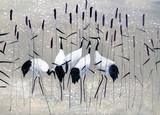 family of cranes - 78488810