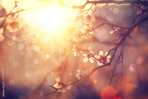 Spring blossom background. Beautiful scene with blooming tree