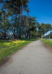 Fototapeta na wymiar Municipal Sidewalk Follows Alongside a Local Roadway..