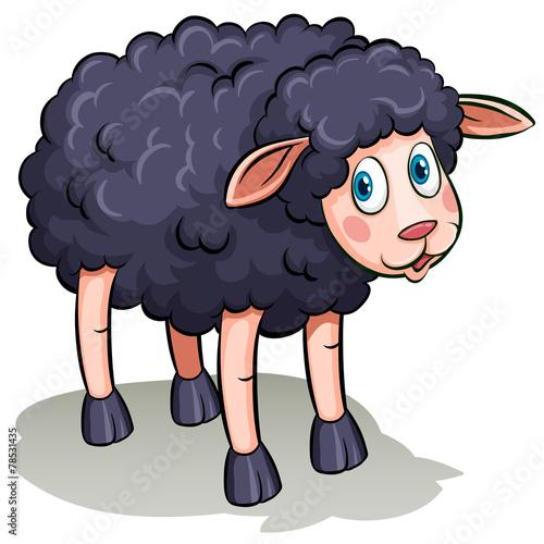 Fotobehang Boerderij A black sheep