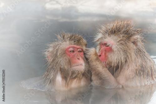 Foto op Plexiglas Aap 混浴中の日本猿のカップル Couple of the monkey entering the hot spring