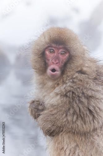In de dag 風呂にはいる日本猿の子 Child of the Japanese monkey which takes a bath