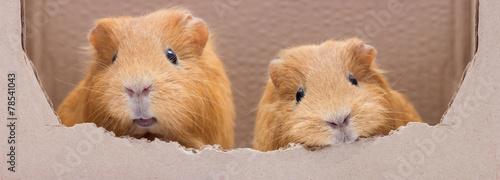 Fotografía  funny rodent