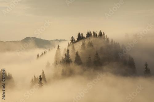Fototapeta Amazing mountain landscape with dense fog. Carpathian Mountains. obraz na płótnie