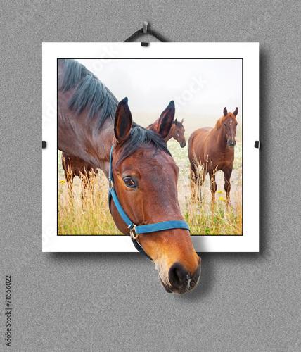 Okleiny na drzwi - Złudzenie optyczne  3d-horse