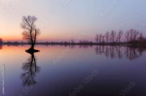 Fotobehang Aubergine Lake with tree at sunrise, Slovakia