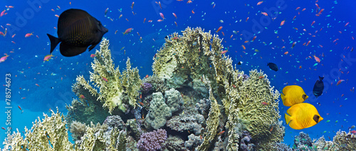 Coral reef scene #78574673