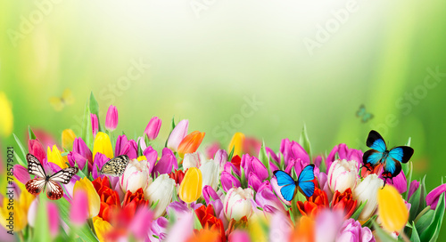 Beautiful bouquet of tulips. - 78579021