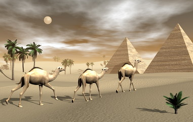 Panel Szklany Pustynia Camels and pyramids - 3D render