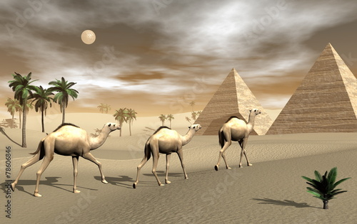 Camels and pyramids - 3D render - 78606846