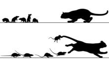 Rats Chasing Cat