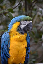 Close Up Of Parrot