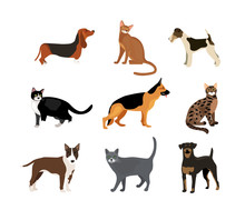 Cats And Dogs Vector Illustrat...