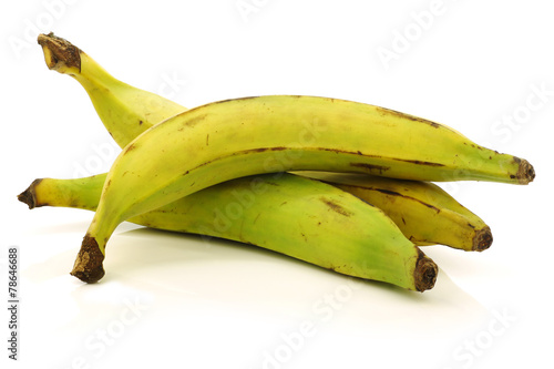 fresh still unripe plantain (baking) bananas on a white backgrou